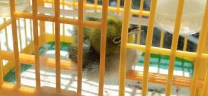 bird in cage enjoys sunbathing