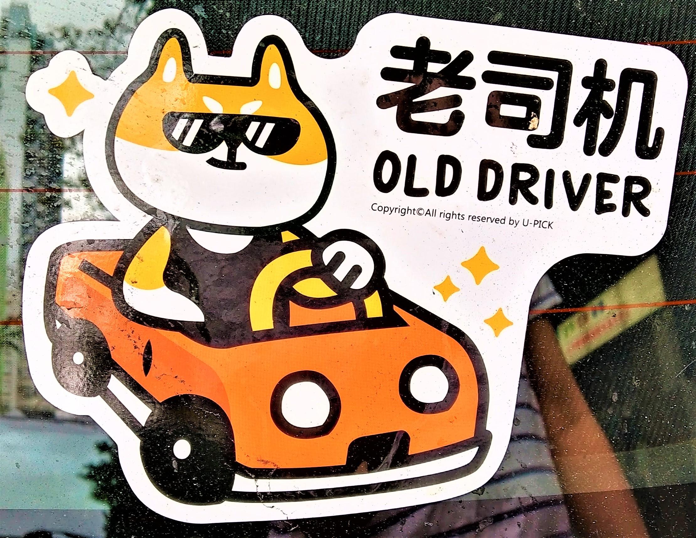 Cute cat as a driver