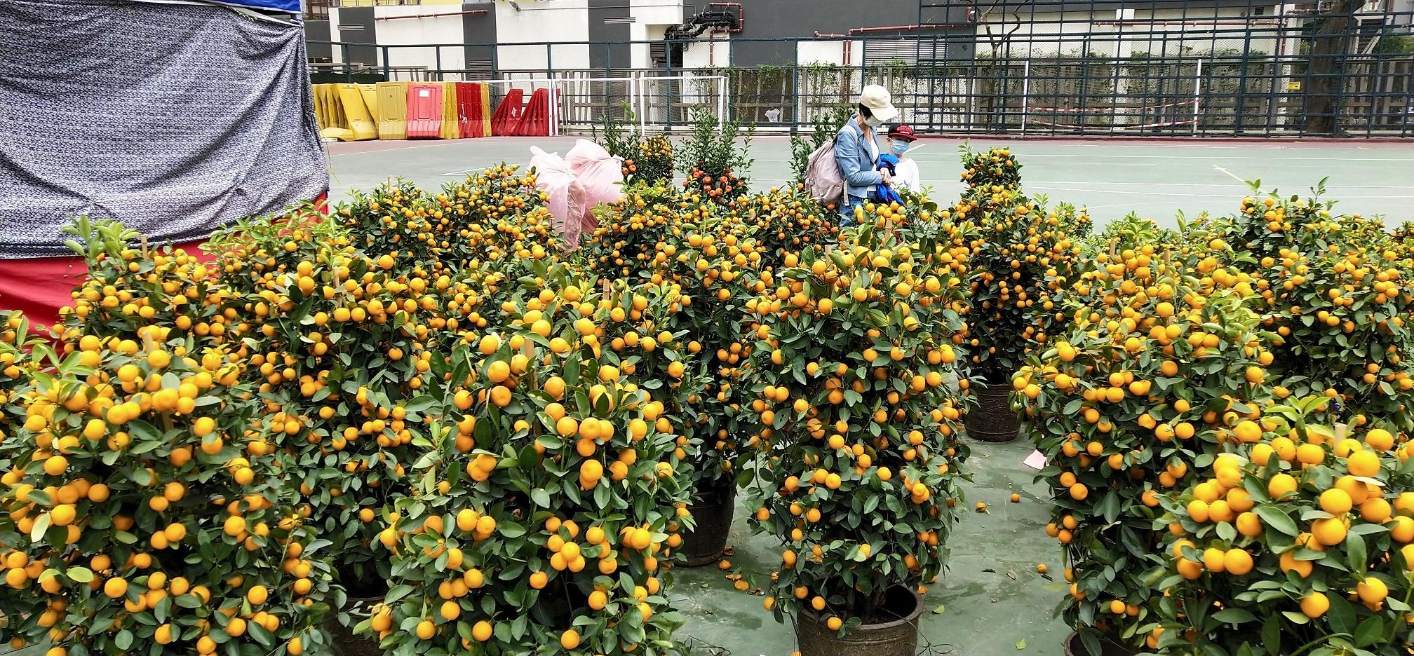 Customers are choosing Panama Oranges