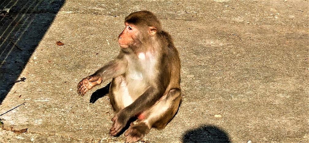 Monkey at Monkey Hill.